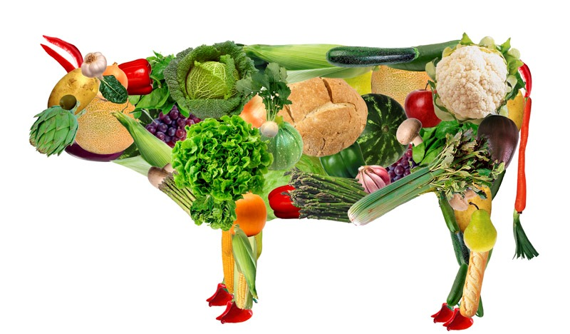 5-vegetariano